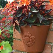 Picture for category Terracotta Wall Planters