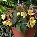 Picture of Terracotta Cone Hanging Planters
