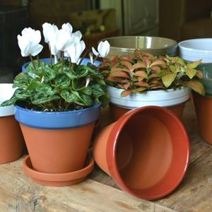 Picture of Glazed Coloured Flower Pots