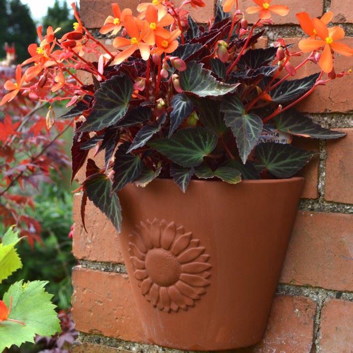 Sunflower Wall Pot Terracotta Uk Com The Home Of Uk