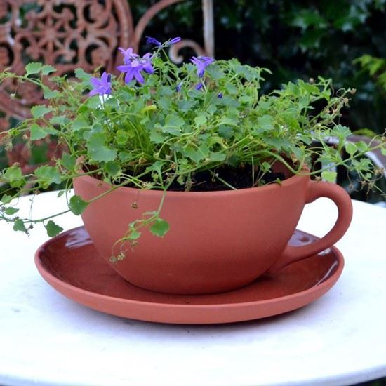 Tea Cup And Saucer Flower Pot - Flowers Healthy