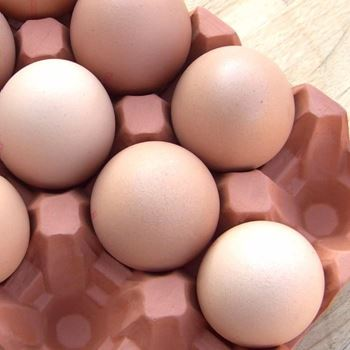 Picture of Natural Terracotta Egg Holder | 12 Eggs