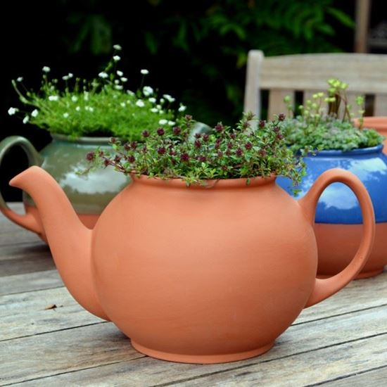 Picture of Teapot Planters