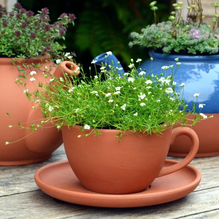 Teacup Amp Saucer Planters Terracotta Uk Com The Home Of