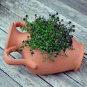 Picture of Amphora Planter