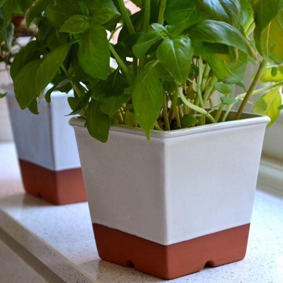 Picture of Herb Pot - Cream Glaze
