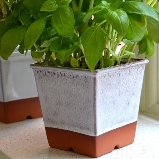 Picture of Herb Pot - Oyster Glaze