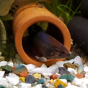 Picture of Fish Tube - with open ends