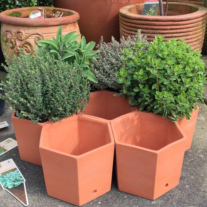 Hexagonal Herb Pots Terracotta Uk Com The Home Of Uk