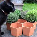 Picture of Hexagonal Herb Pots (set of 7)