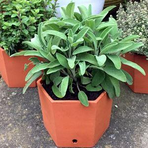 Picture of Hexagonal Herb Pot Single