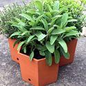 Picture of Hexagonal Herb Pots (set of 3)