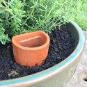 Picture of Wall Pot Waterer - Medium