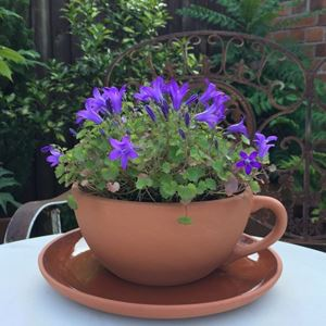 Picture for category Garden Planters