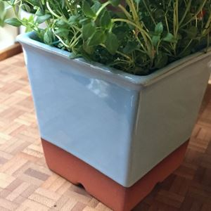 Picture of Herb Pot - Pale Blue Glaze